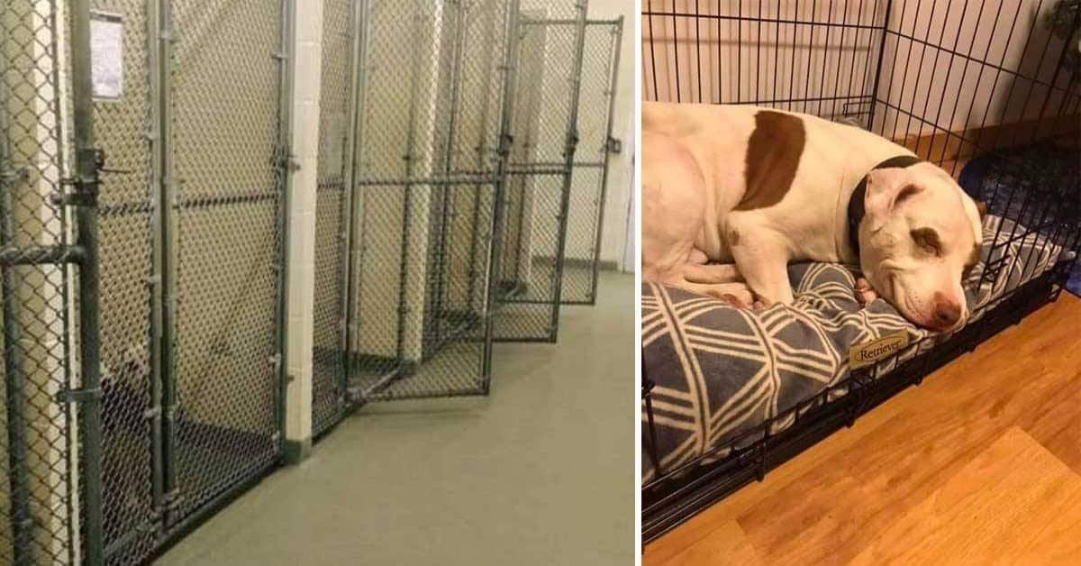 Capone-il-cane-che-non-voleva-adottare-nessuno