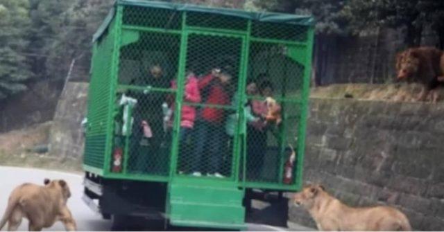 lo-zoo-rivoluzionario-in-cui-gli-animali-vengono-lasciati-liberi-e-la-gente-chiusa-in-gabbia