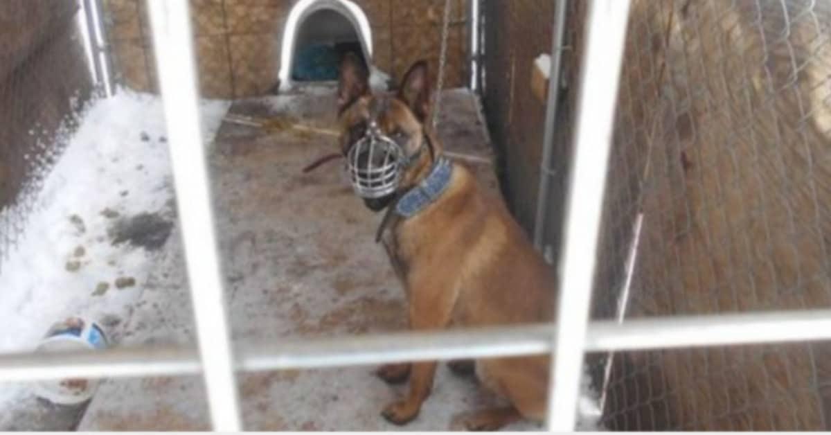uomo-denunciato-per-le-condizioni-in-cui-teneva-il-suo-cane