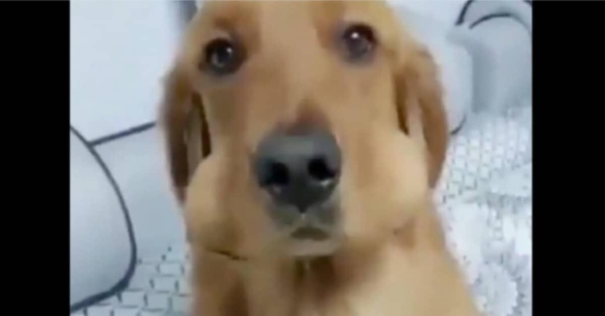 Il cane che ruba le uova