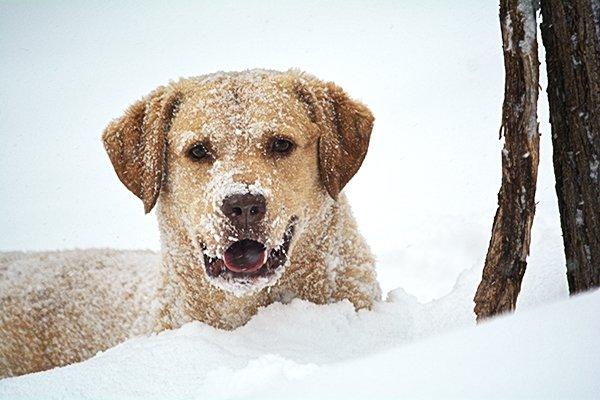 il-cane-lasciato-al-freddo 1