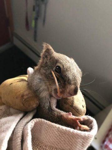 il-grande-dente-dello-scoiattolo 2
