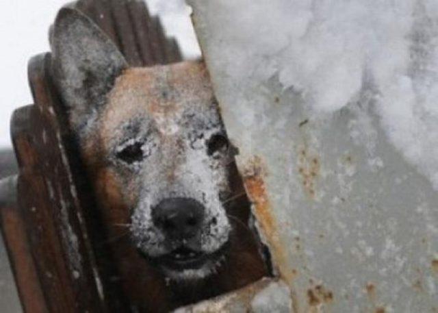 i-maltrattamenti-subiti-dal-cane 2