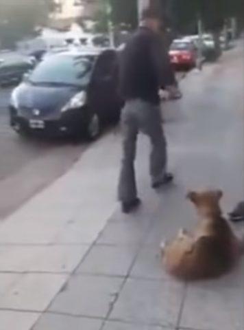 abbandona-cane