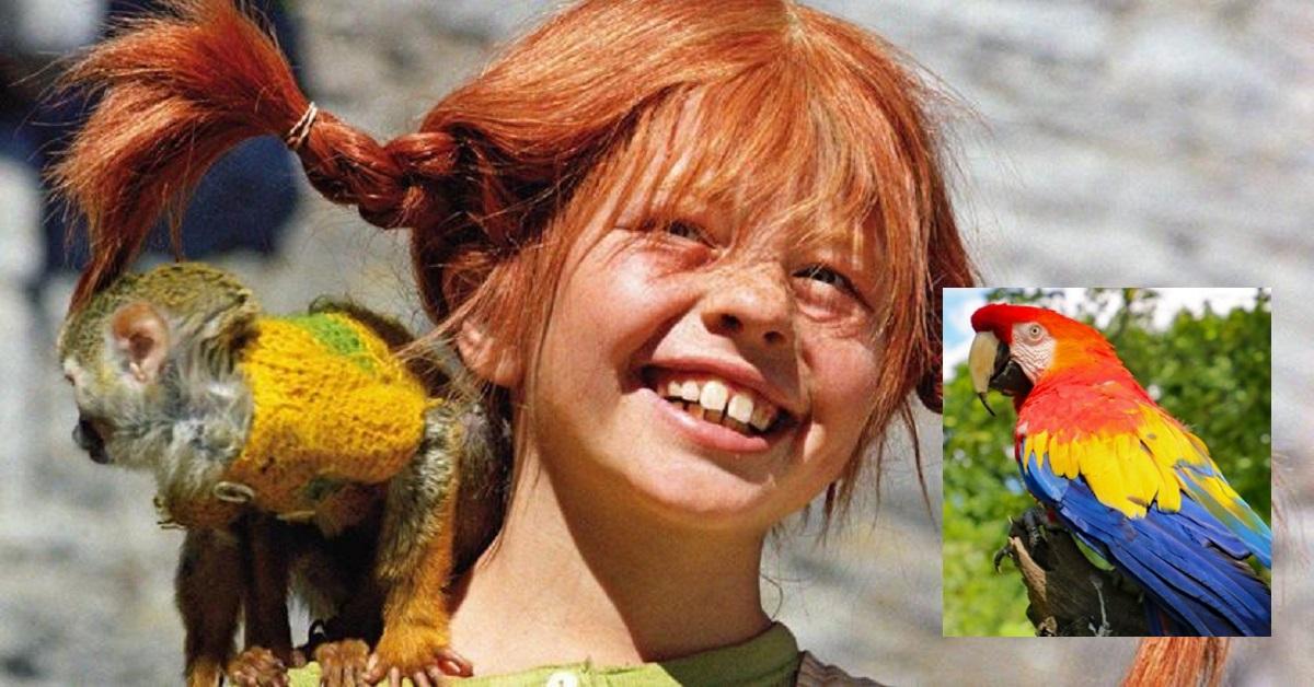 Addio Rosalinda, pappagallo Pippi Calzelunghe