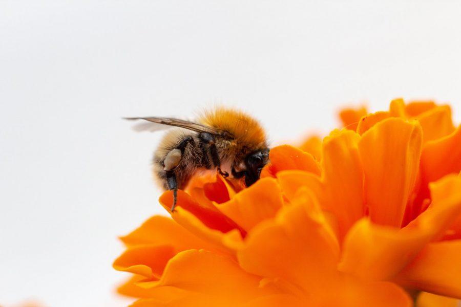 api-estinzione