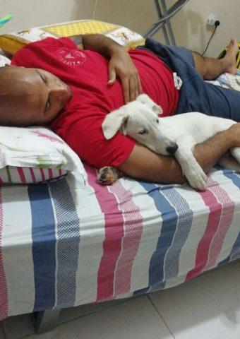 il-cagnolino-che.sceglie-da-solo-il-suo-nuovo-amico-umano 2