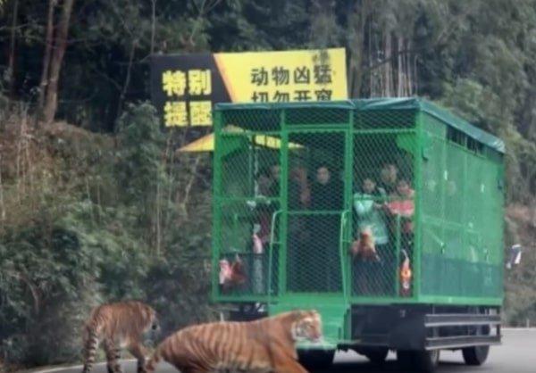 lo-zoo-in-cui-gli-animali-vengono-lasciati-liberi 2