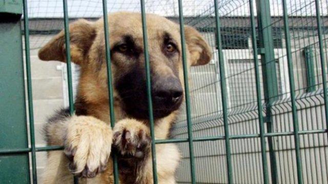 i-maltrattamenti-subiti-dal-cane 1