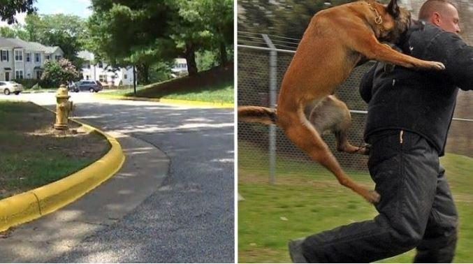 cane difende bambina