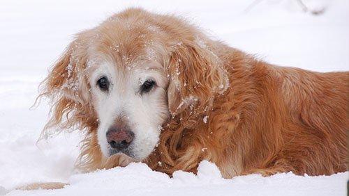 il-cane-lasciato-al-freddo 3