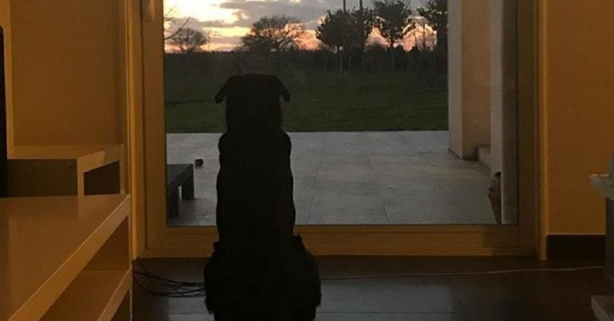 emiliano-sala-cane-aspetta-foto