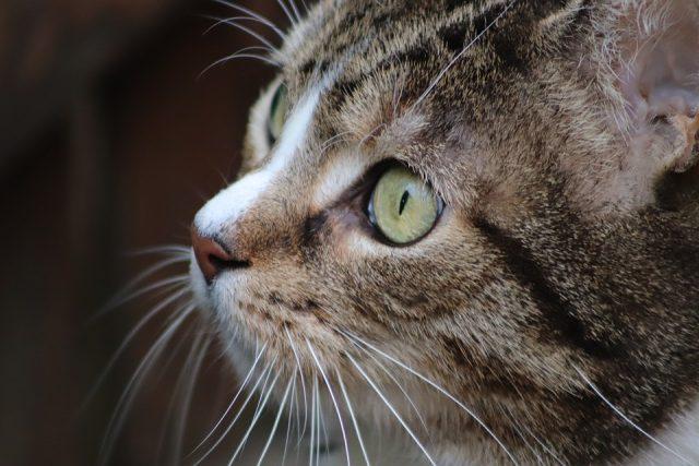 gatto-pelo