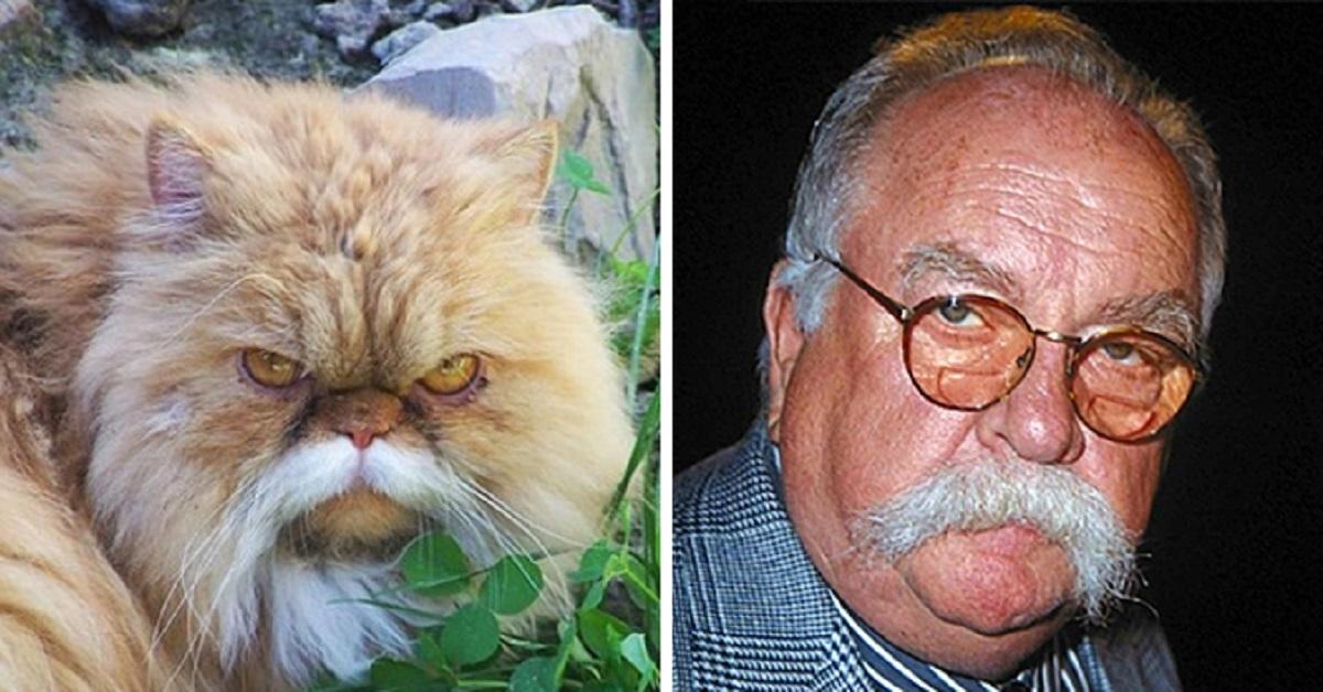 gatto-rispecchia-proprietario
