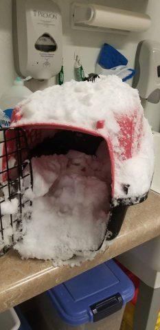 il-gatto-abbandonato-nella-neve 1
