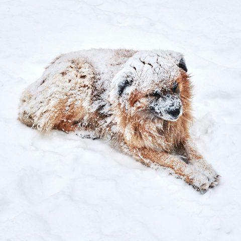 il-cane-lasciato-al-freddo