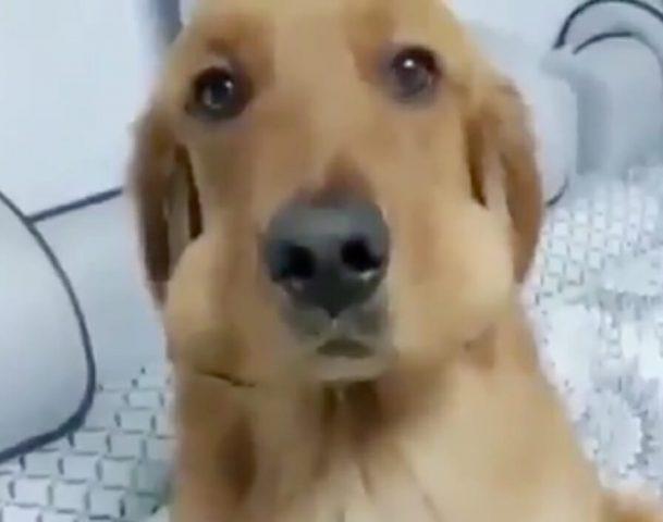 il-cane-che-ruba-le-uova 1