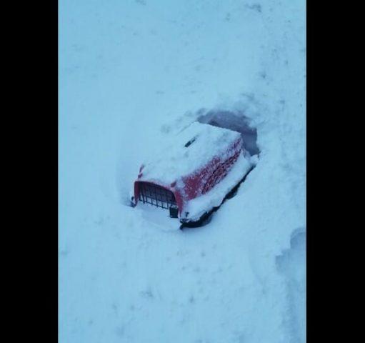 il-gatto-abbandonato-nella-neve
