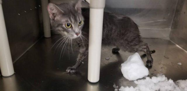 il-gatto-abbandonato-nella-neve 2