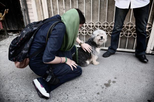 la-capitale-iraniana-vieta-ai-cani-di-camminare-in-pubblico