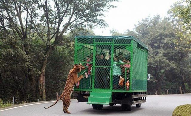 lo-zoo-in-cui-gli-animali-vengono-lasciati-liberi 1