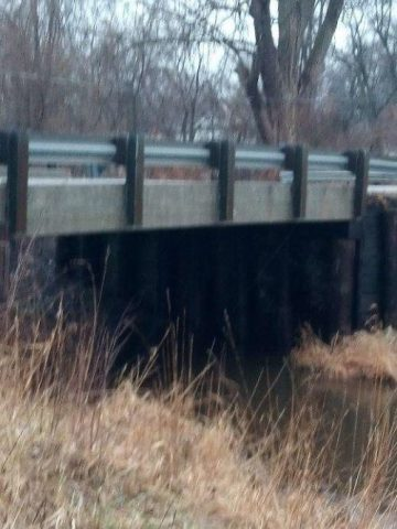 il-salvataggio-del-cucciolo-abbandonato-sotto-il-ponte