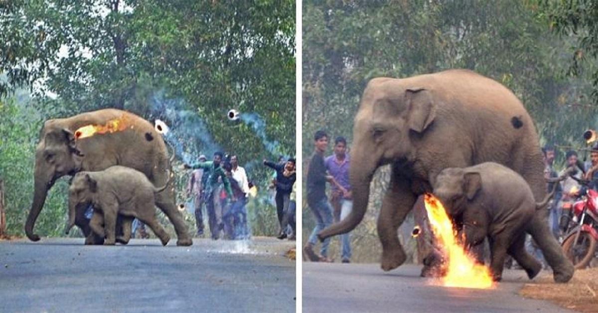 mamma-elefante-attaccata-insieme-al-cucciolo-da-bombe-incendiarie