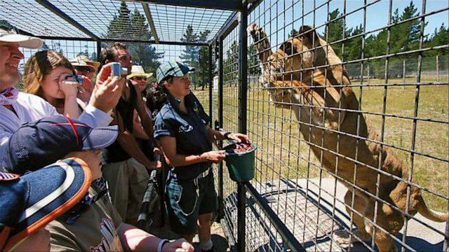 lo-zoo-in-cui-gli-animali-vengono-lasciati-liberi