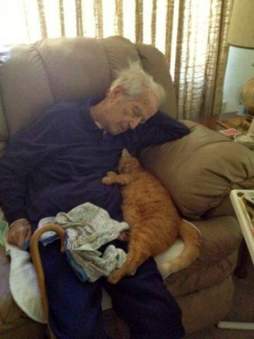 nonno-gatto