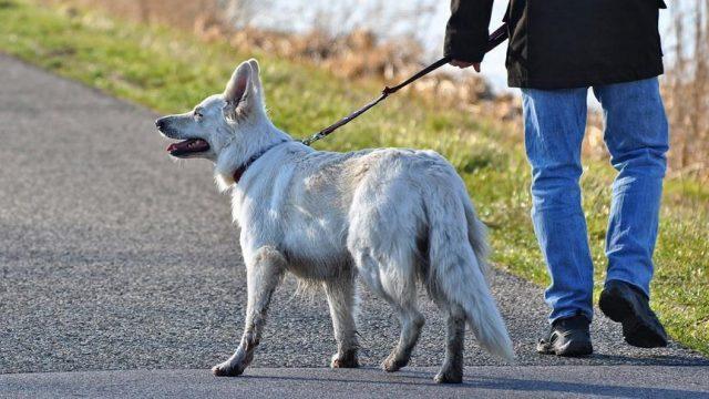 passeggiare-cane