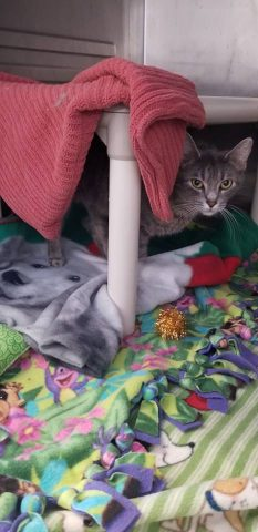 il-gatto-abbandonato-nella-neve 3