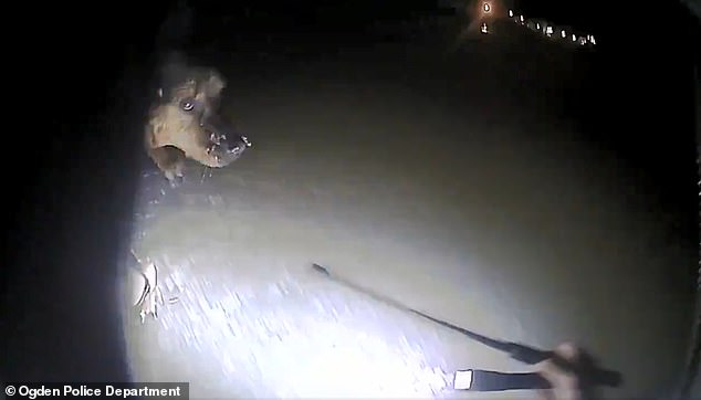 agente-salva-la-vita-del-cane 1