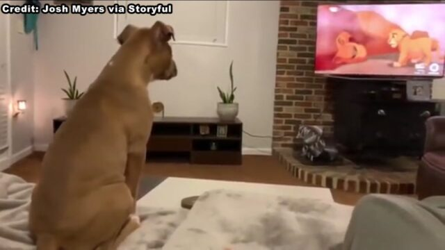 la-cagnolina-che-piange-nel-vedere-il-Re-Leone