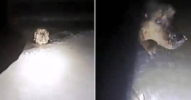 agente-salva-la-vita-del-cane-che-era-caduto-nel-canale-ghiacciato