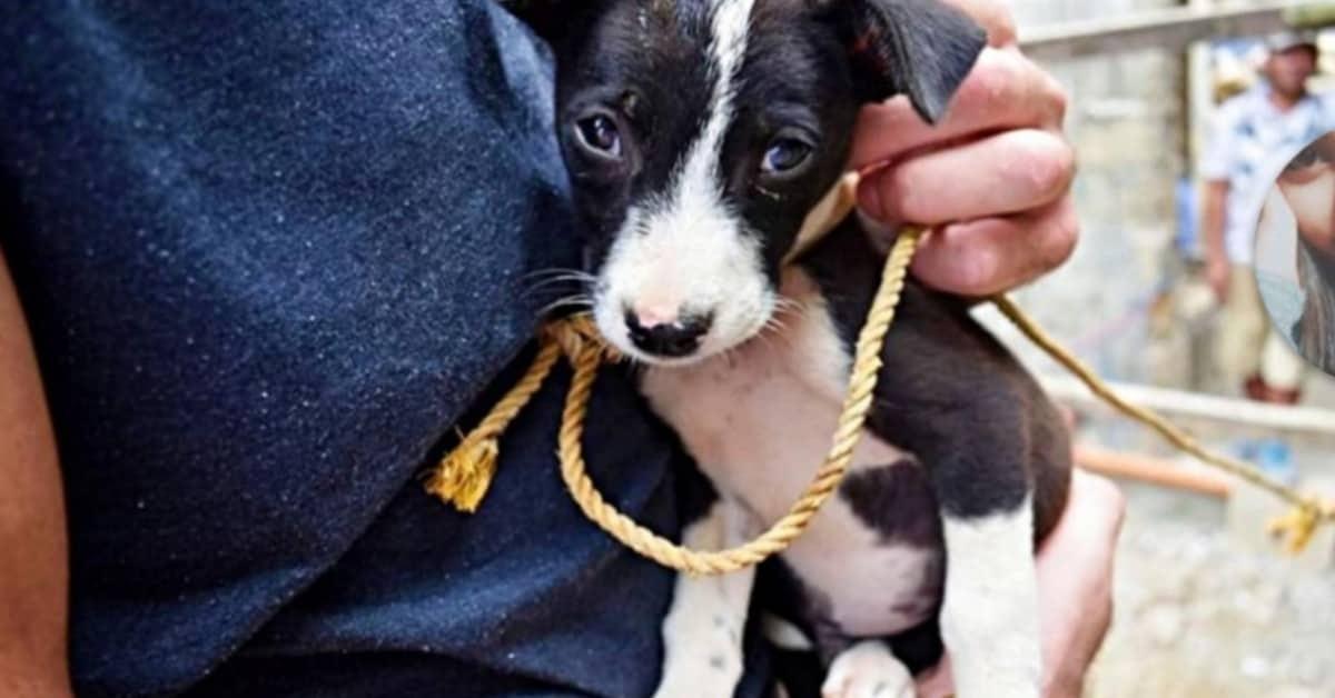 il-salvataggio-del-cucciolo-tenuto-in-condizioni-terribili
