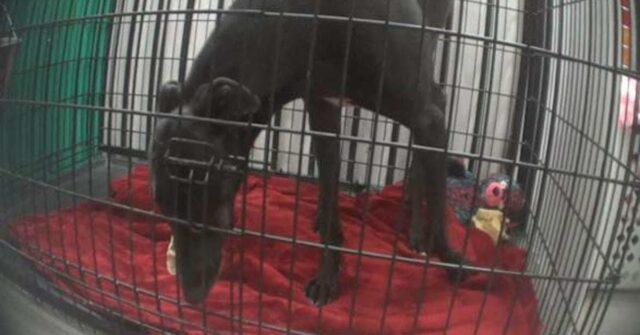 Bodhi-il-cane-che-ha-vissuto-la-maggior-parte-della-sua-vita-in-una-gabbia