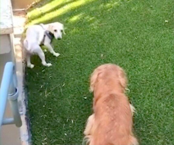 i-traumi-subiti-da-i-cani-negli-allevamenti 2