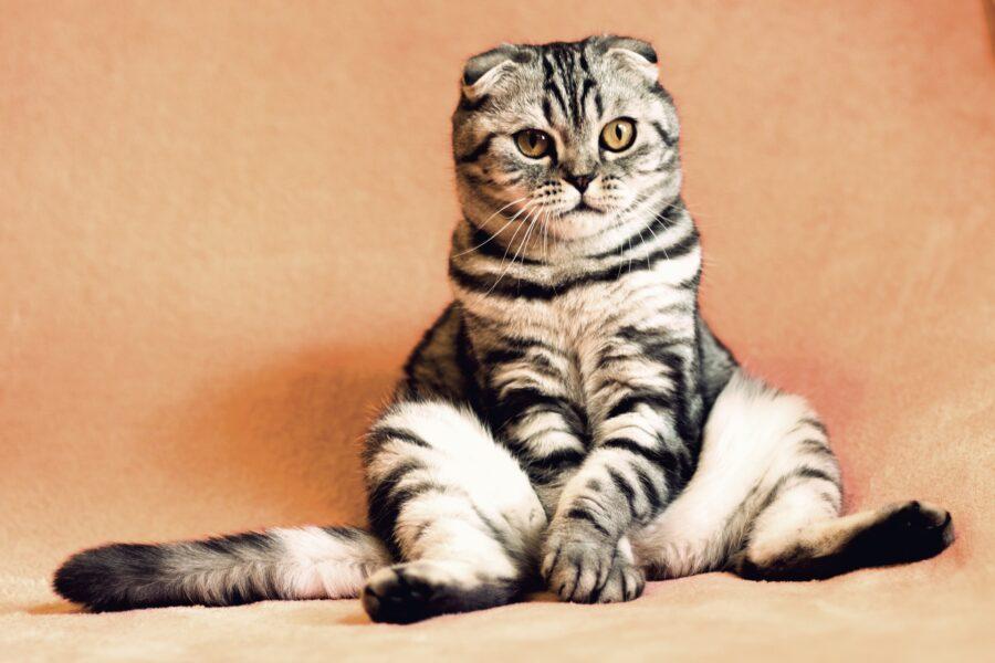 Regolamento capitolino tutela e benessere degli animali