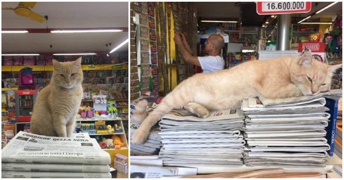 addio-nando-il-gatto-edicolante-di-Firenze