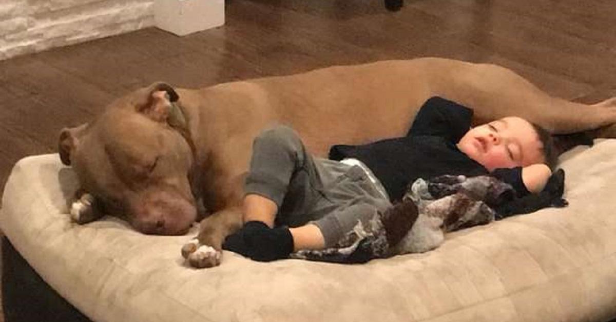 Bambino prende l'influenza e trova conforto solo con il cane di famiglia