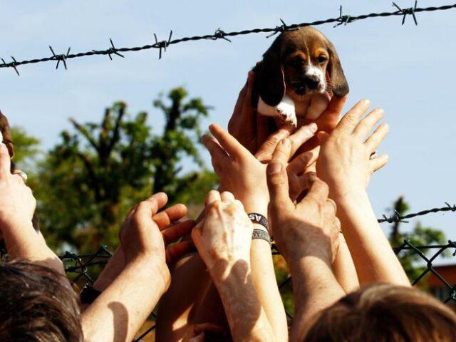 beagle-vita