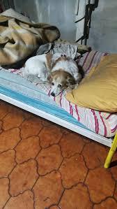 bisulin-cane-adottato