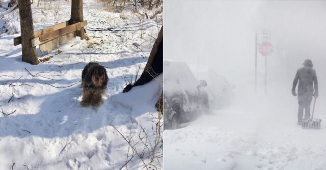 brooks-il-cane-lasciato-fuori-durante-una-tempesta-di-neve