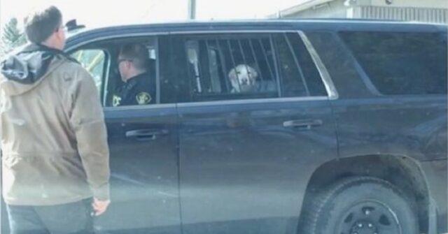 cane-arrestato-dalla-polizia-per-aver-inseguito-un-cervo