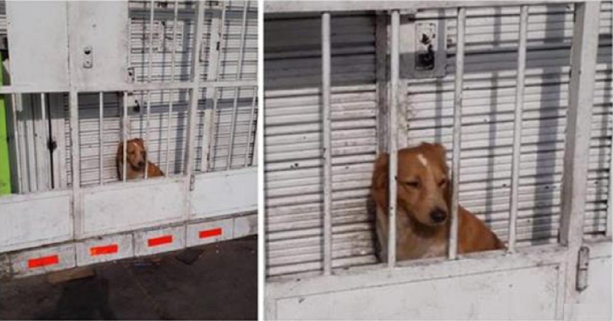 Il cane che doveva fare la guardia