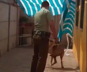 cane-incastrato