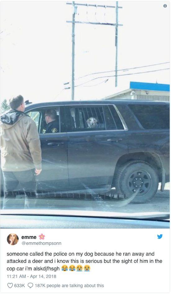 cane arrestato dalla polizia