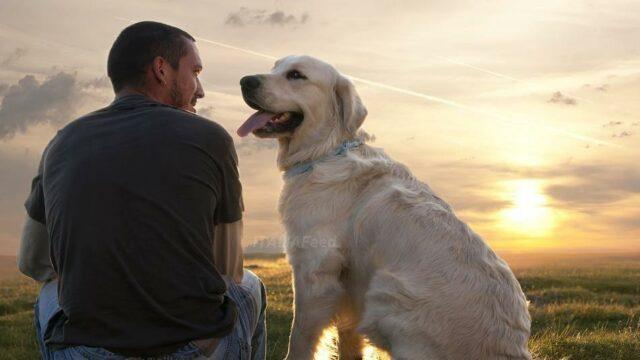 cane-proprietario