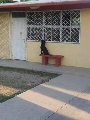 cane-scuola