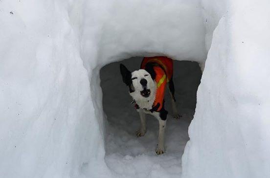 cani di salvataggio